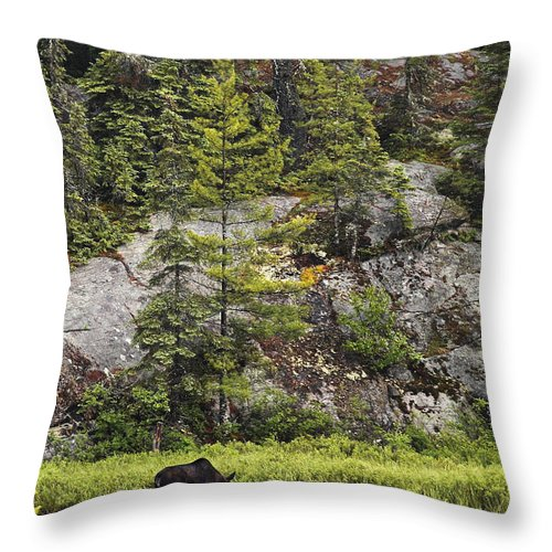 Moose Throw Pillow featuring the photograph The Intruder by Linda McRae