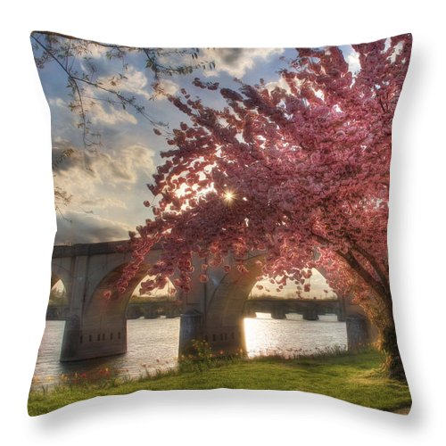 Tree Throw Pillow featuring the photograph The Last Glimmer by Lori Deiter