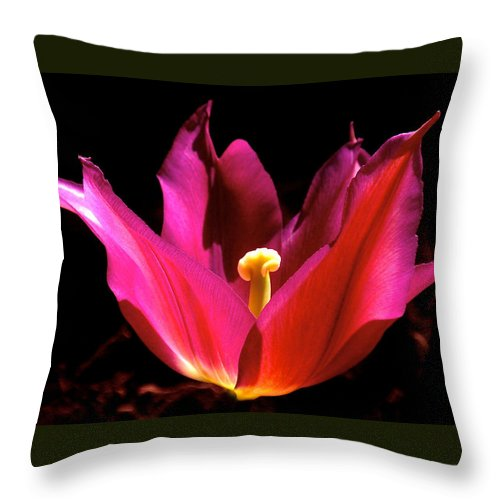 Tulip Throw Pillow featuring the photograph The Light Of Day by Rona Black