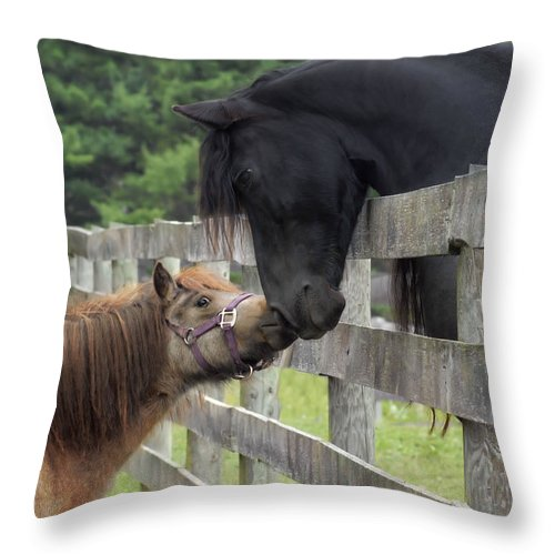 Horses Throw Pillow featuring the photograph The Little Visitor by Fran J Scott