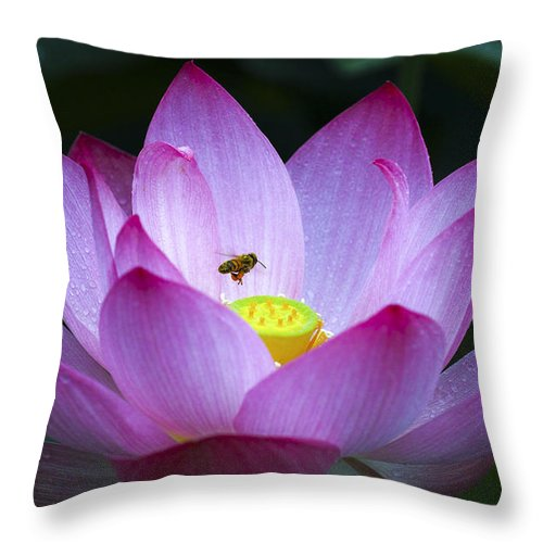 Macro Throw Pillow featuring the photograph The Lotus by Son Truong