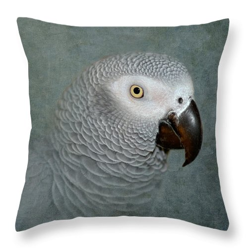 Parrot Throw Pillow featuring the photograph The Love Of A Gray by Betty LaRue