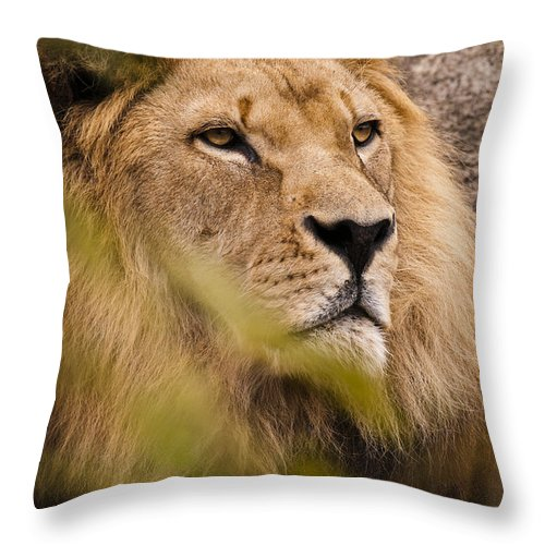 Lion Throw Pillow featuring the photograph The Magnificent Cat by Chad Davis