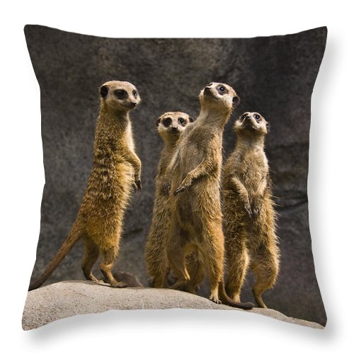Chad Davis Throw Pillow featuring the photograph The Meerkat Four by Chad Davis