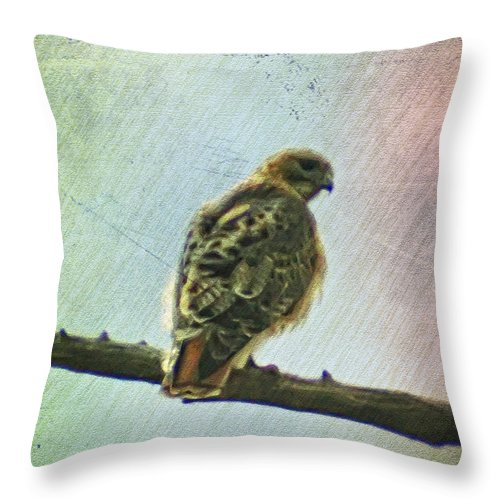 Falcon Throw Pillow featuring the photograph The Mighty Falcon by Bill Cannon