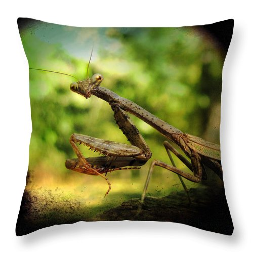 Photo Throw Pillow featuring the photograph The Observer by Amy Tyler