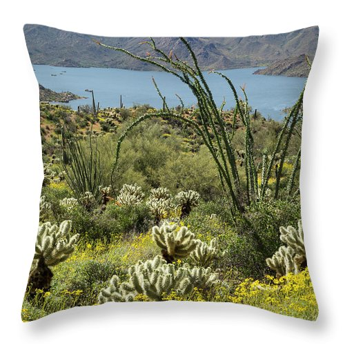 Arizona Throw Pillow featuring the photograph The Ocotillo View by Cathy Franklin