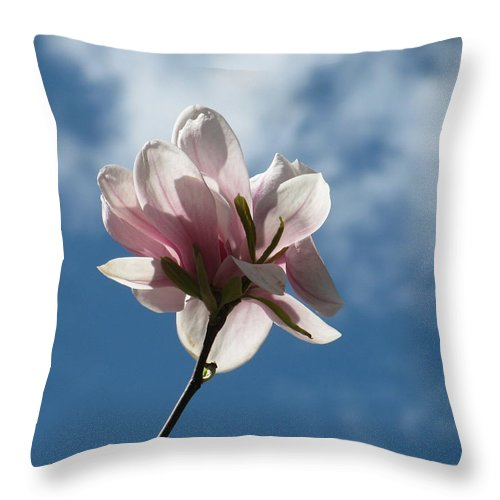 Spring Throw Pillow featuring the photograph The One And Only by Alfred Ng