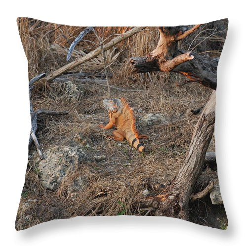 Branches Throw Pillow featuring the photograph The Orange Iguana by Rob Hans