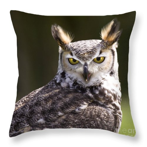 Owl Throw Pillow featuring the photograph The Owl by Angel Ciesniarska