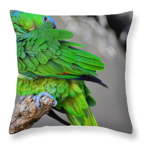 Bird Throw Pillow featuring the photograph The Parrot by Donna Greene