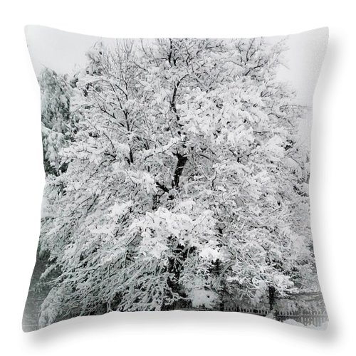 Tree Throw Pillow featuring the photograph The Pear Tree by Heather Hubbard