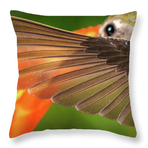 Animal Throw Pillow featuring the photograph The Perfect Left Wing Of A Hummingbird by William Freebilly photography