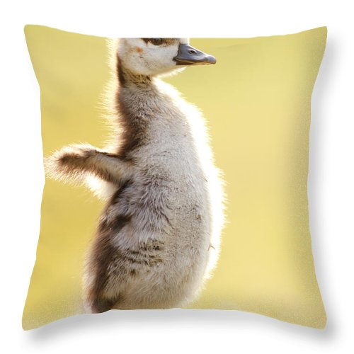685a0b029739 Gosling Throw Pillow featuring the photograph The Pinguin Simulator by Roeselien  Raimond