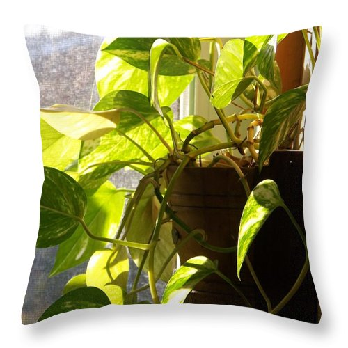 Plant Throw Pillow featuring the photograph The Plant That Ate My Kitchen - Photograph by Jackie Mueller-Jones