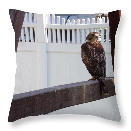 Hawk Wildlife Bird Nature Throw Pillow featuring the photograph The Playset by Anna Villarreal Garbis