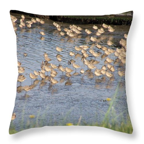 Seabirds Throw Pillow featuring the photograph The Plovers by Laurie Kidd