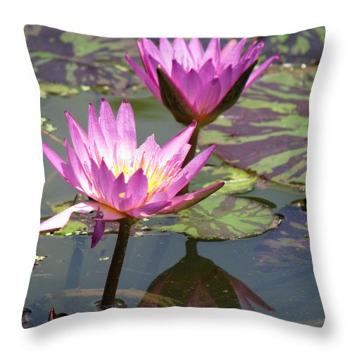Lillypad Throw Pillow featuring the photograph The Pond by Amanda Barcon