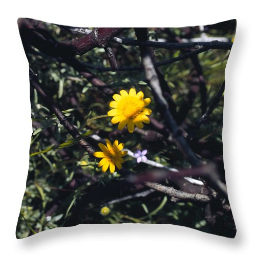 Flower Throw Pillow featuring the photograph The Prisoner by Randy Oberg