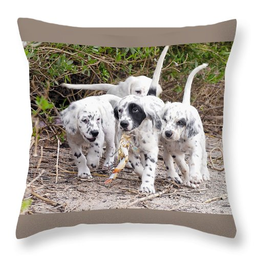 English Setter Throw Pillow featuring the photograph The Puppy's Prize by Scott Hansen