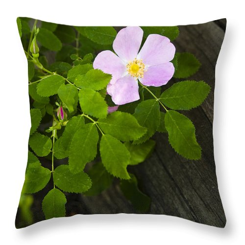 Flower Throw Pillow featuring the photograph The Purple Flower by Chad Davis