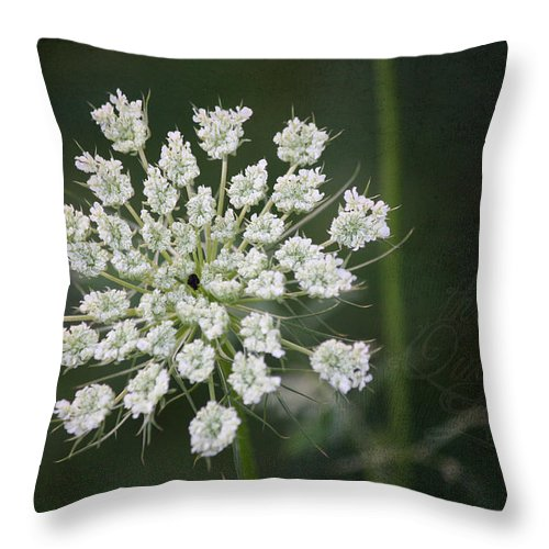 Queen Anne's Lace Throw Pillow featuring the photograph The Queens Lace by Teresa Mucha