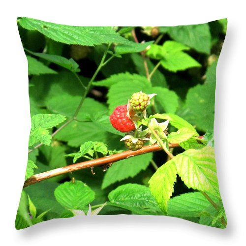 Rasberry Throw Pillow featuring the photograph The Rasberry Patch by Ian MacDonald