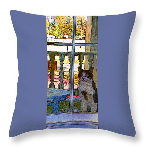 Cat Throw Pillow featuring the photograph The Rear Window by Shirley Sykes Bracken