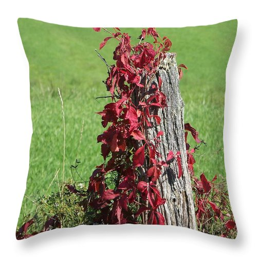Vine Throw Pillow featuring the photograph The Red Vine - Photograph by Jackie Mueller-Jones