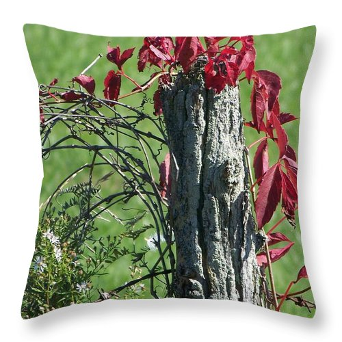 Vine Throw Pillow featuring the photograph The Red Vine 2 by Jackie Mueller-Jones