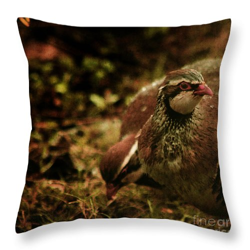 Partridge Throw Pillow featuring the photograph The Redlegged Partridges by Angel Ciesniarska
