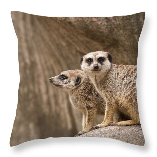 Meerkat Throw Pillow featuring the photograph The Rock Of Meerkats by Chad Davis