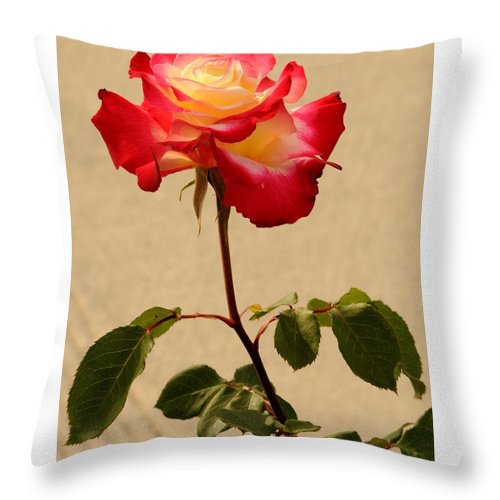 Flower Throw Pillow featuring the photograph The Rose by CM Thibault