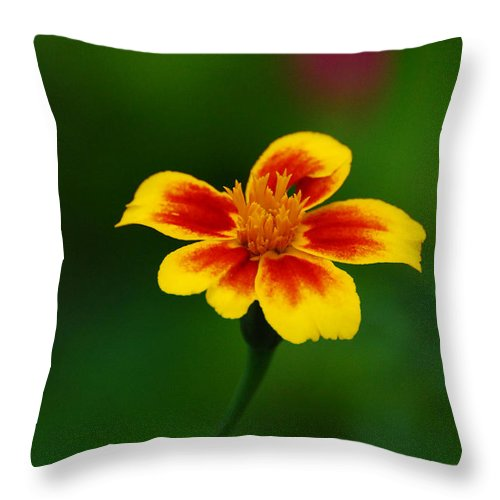 Flower Throw Pillow featuring the photograph The Same To You by Adrian Bud