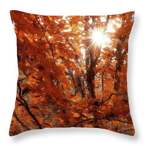 Fall Throw Pillow featuring the photograph The Season Shines Bright by Mike Eingle