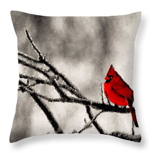Cardinal Throw Pillow featuring the photograph The Sentinel by Kristin Elmquist