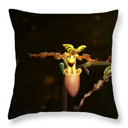 Lady Slipper Orchids Throw Pillow featuring the photograph The Slippers by Joanne Smoley