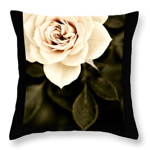 Rose Throw Pillow featuring the photograph The Softest Rose by Marilyn Hunt