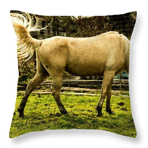Fence Throw Pillow featuring the photograph The Spring Fling by Laddie Halupa