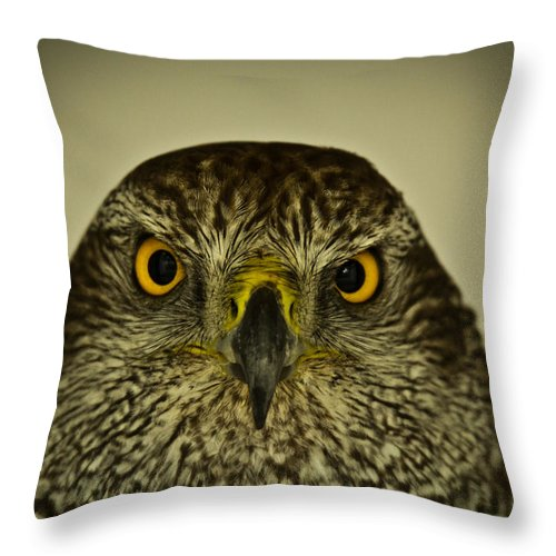 Bird Throw Pillow featuring the photograph The Stare by Chris Whittle