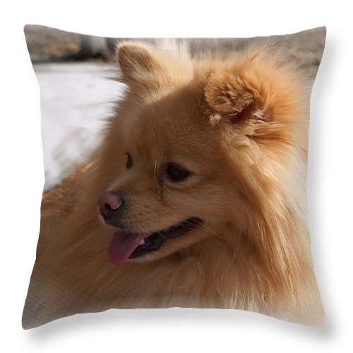 Pomeranian Dog Throw Pillow featuring the photograph The Sun On My Back by Joanne Smoley