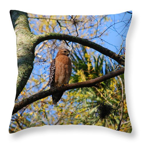 Buzzard Throw Pillow featuring the photograph The Supervisor by Susanne Van Hulst