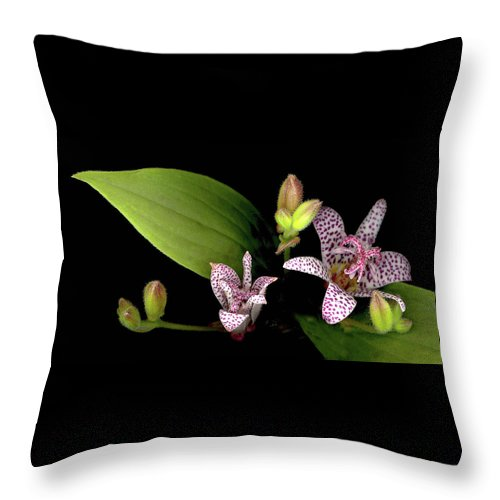 Lily Throw Pillow featuring the photograph The Toad Lily by Sandi F Hutchins