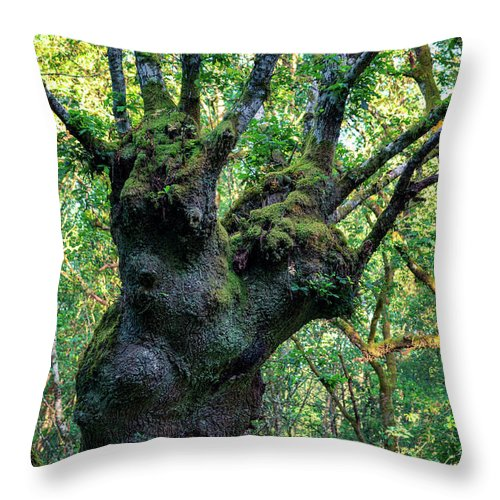 Tree Throw Pillow featuring the photograph The Tree by Pedro Ferreiro