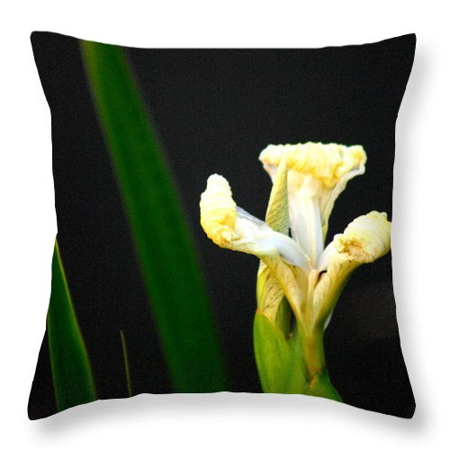 Lily Throw Pillow featuring the photograph The Unfolding by David Dunham