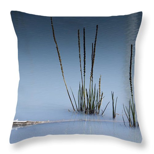 Chad Davis Throw Pillow featuring the photograph The Vigor Of Life by Chad Davis