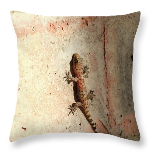 Wall Throw Pillow featuring the photograph The Wall Walker by Alycia Christine