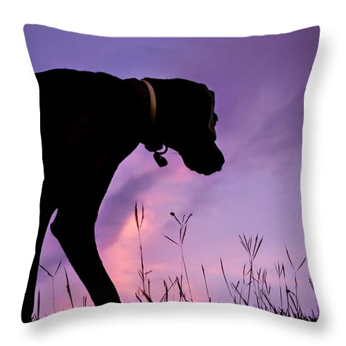 Dog Throw Pillow featuring the photograph The Watcher by Guillermo Cummmings