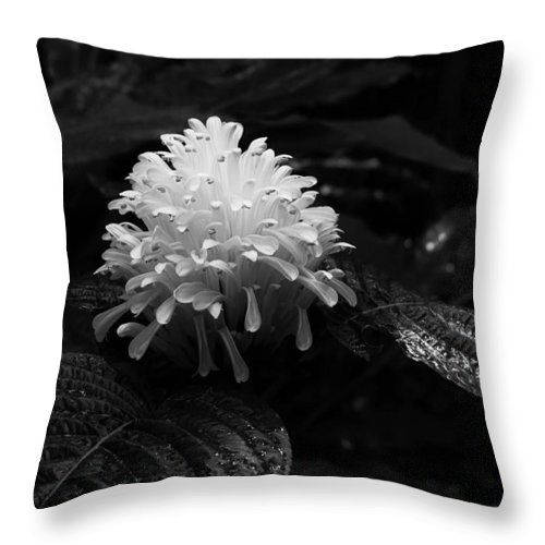Ann Keisling Throw Pillow featuring the photograph The White Bloom by Ann Keisling