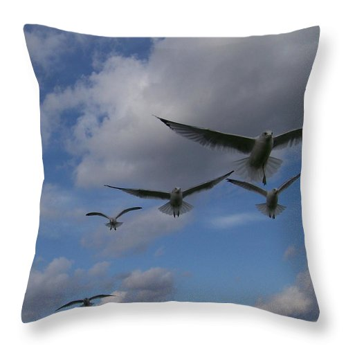 Gulls Throw Pillow featuring the photograph The Whole Squadron by Jackie Mueller-Jones